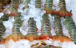 Lobsters on ice Royalty Free Stock Image
