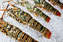 Lobsters on ice Stock Photos