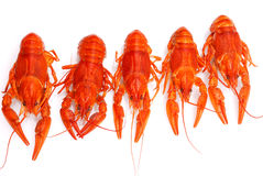 Lobsters isolated Royalty Free Stock Image