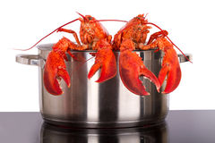 Lobsters looking out of pot Royalty Free Stock Photo