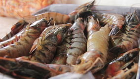 Lobsters and Marine Products on Fish Market stock video