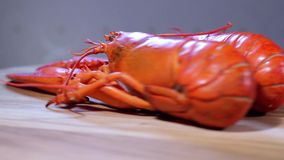 Lobsters in motion. Two boiled lobster on table in motion stock video