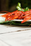 Lobsters on a plate. With parsley Stock Photo