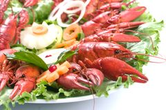 Lobsters plate. Red lobsters in a plate Royalty Free Stock Image