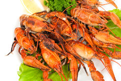 Lobsters with salad. On white plate Stock Images