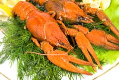 Lobsters with salad Royalty Free Stock Images