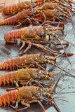 Lobsters for sale at seafood market Royalty Free Stock Images