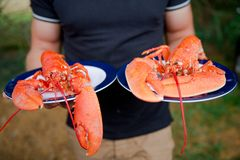 Lobster seafood on the plate royalty free stock photography