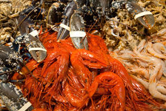 Lobsters, shrimp and crayfish Stock Image
