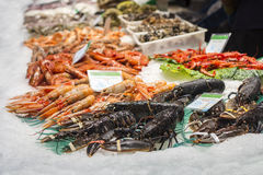 Lobsters, shrimps and prawns, fresh seafood Stock Images
