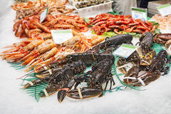 Lobsters, shrimps and prawns Royalty Free Stock Photo