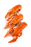 Lobsters on a white background. The prepared lobsters on a white background, isolation Stock Photo
