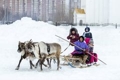 "Local aborigines - Khanty, ride children on a reindeer sleigh of three deer, sleigh, winter, ""Seeing off winter"" festival. Surgu Region Square stock photos"