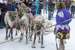 "Local aborigines - Khanty, ride children on a reindeer sleigh of three deer, sleigh, winter, ""Seeing off winter"" festival stock photography"