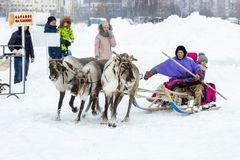 "Local aborigines - Khanty, ride children on a reindeer sleigh of three deer, sleigh, winter, ""Seeing off winter"" festival royalty free stock photo"