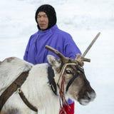 "Local aborigines - Khanty, reindeer sleigh of three deer, winter, ""Seeing off winter"" festival royalty free stock photos"
