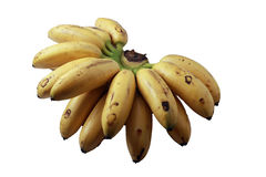 Local bananas on white. Bunch of local bananas called 'pisang emas' on isolated background Stock Images