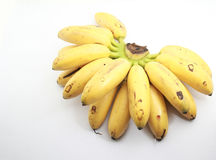 Local bananas on white. Bunch of local bananas called 'pisang emas' on isolated background Royalty Free Stock Photos