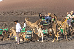 Local camel riding man prepares the camels for a ride with touri Stock Photo