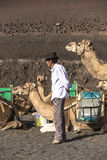 Local camel riding man prepares the camels for a ride with touri Royalty Free Stock Photo
