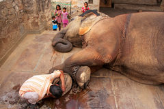 Local caretaker cleaning elephant's foot at small elephant quarters Stock Photos