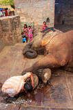 Local caretaker cleaning elephant's foot at small elephant quarters Stock Photography