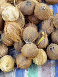 Local Coconuts display on canvas Stock Image