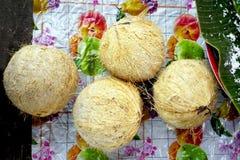 Local Coconuts at Fresh market Stock Photos