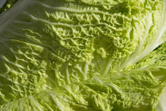 Local details of Chinese Cabbage Royalty Free Stock Images