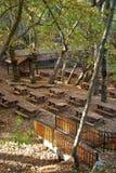 Local do piquenique da floresta do carvalho Imagem de Stock
