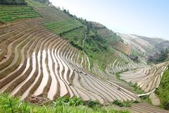 Local do UNESCO dos terraços do arroz de Longji, China Imagem de Stock Royalty Free