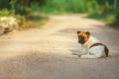 Local dog,. Thai dog lay down at the local road for warm body in morning of winter season Royalty Free Stock Photography