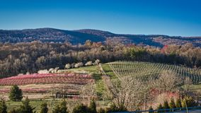 Free Local Family Orchard In Spring Stock Photo - 143462460