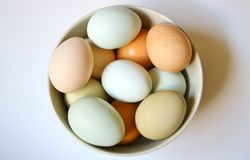 Local Farm Fresh Eggs in a Bowl Royalty Free Stock Image