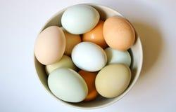 Local Farm Fresh Eggs in a Bowl. Variety of Local Farm Fresh Eggs in a Bowl Royalty Free Stock Image