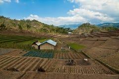 Local Farm, Vegetable garden on Flores, Indonesia. Vegetable garden with a local farm hut on Flores island, Indonesia Stock Photography