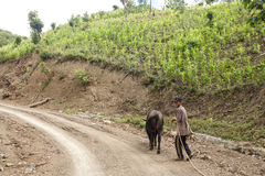 Local Farmer in Chin State, Myanmar Stock Images