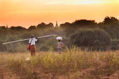 The local farmers in Bagan Royalty Free Stock Image
