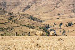 Local farmers on the field in Simien Mountains in Ethiopia Royalty Free Stock Photos