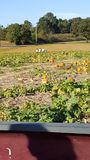 The Little Pumpkin Patch. A local farmers pumpkin patch in Holladay stock image