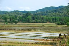 Local farmers risk their life in Rice paddy fields near the Plain of Jars archaeological site. The fields conceal a hidden danger from unexploded bombs from Stock Photo