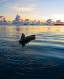 Local fisherman rows his boat during sunrise. A local fisherman rows his boat during sunrise in the exotic tropical ocean Royalty Free Stock Photos