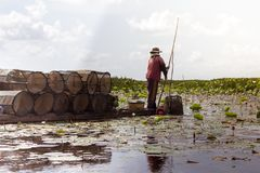 Local fishermen fish in lotus ponds. Alone Royalty Free Stock Photos