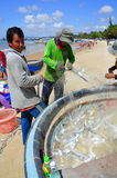 Local fishermen are removing fishes from their fishing nets in the Lagi beach Royalty Free Stock Images