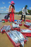 Local fishermen are selling their fishes to the locals and tourists on the Lagi beach Stock Image