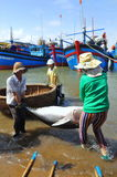 Local fishermen are transporting tuna fish from their vessels to the stretcher and bring it to the testing house in Tuy Hoa seapor Royalty Free Stock Photography
