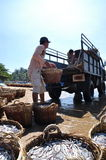 Local fishermen are uploading fisheries onto the truck to the processing plant in Lagi beach Stock Images