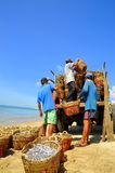 Local fishermen are uploading fisheries onto the truck to the processing plant in Lagi beach Royalty Free Stock Photo