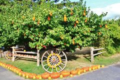 Local fruit shop, dealer in Princeton, British Columbia. Nice decoration with pumpkin, groud, fruits on Vintage tractor, Classic c Royalty Free Stock Photo