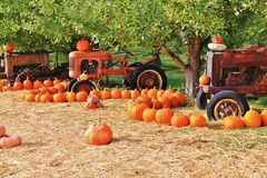 Local fruit shop, dealer in Princeton, British Columbia. Nice decoration with pumpkin, groud, fruits on Vintage tractor, Classic c Stock Photos